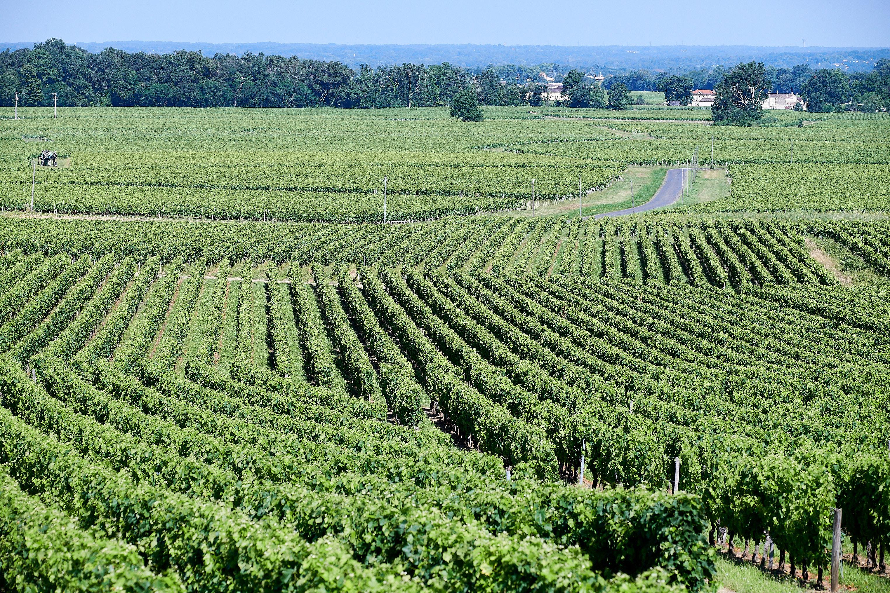 The vineyard Vignobles Bertin